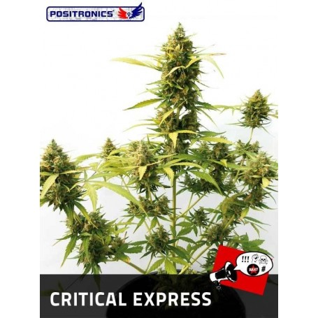 Critical Express de Positronics