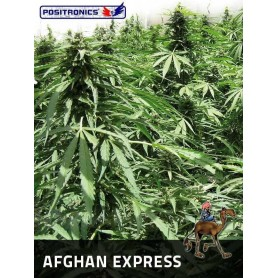 Afghan Express de Positronics