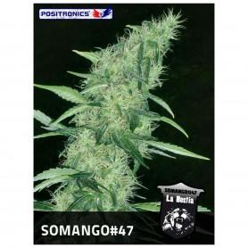 Somango 47 3u - Positronics