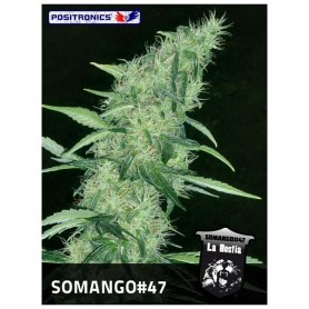 Somango 47 5u - Positronics
