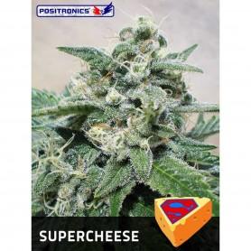 Super Chesse 10u - Positronics