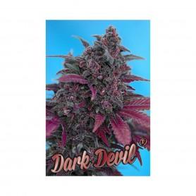 3+1 Semillas Dark Devil Autofloración de Sweet Seeds
