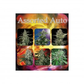 Assorted Autofloración 10 de  Budha Seeds