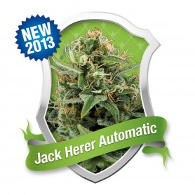 Jack Herer Autofloración de Royal Queen