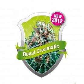 Royal Creamatic Autofloración de Royal Queen