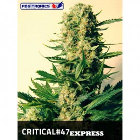 Critical 47 Express de Positronics