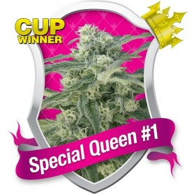 Special Queen nº1 de Royal Queen