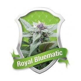 Royal Bluematic Autofloración de Royal Queen