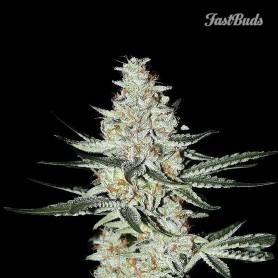 Fast Buds - Californian Snow 3u