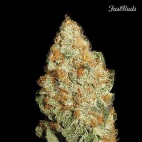 Fast Buds - LSD-25 Auto 3u