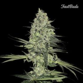 Fast Buds - Rhino Ryder 1u
