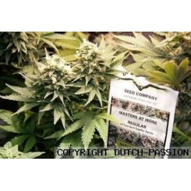 10 Semillas Master Kush Regulares de Dutch Passion