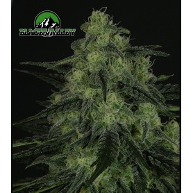 Black Valley de Ripper Seeds