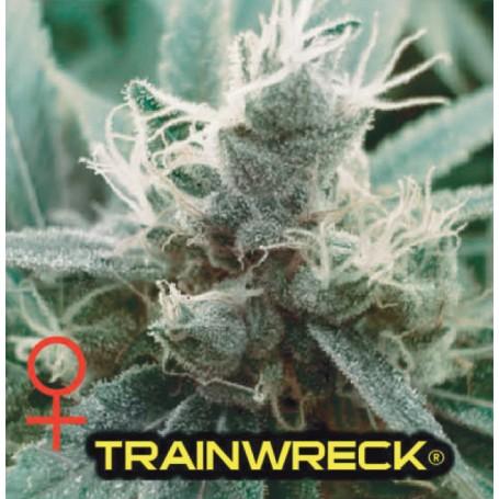 Trainwreck de Humboldt Seed Organization