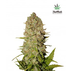 Pineapple Express de Fast Buds