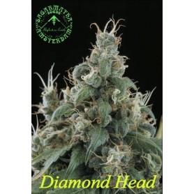 10 Semillas Diamond Head Feminizadas de Sagarmatha