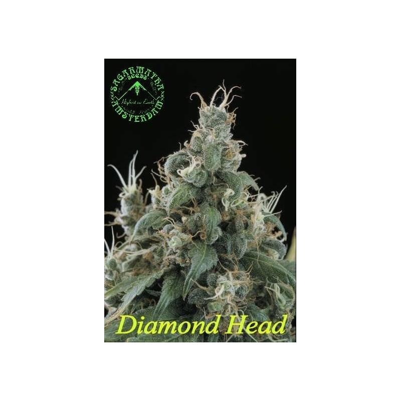 Diamond Head de Sagarmatha