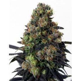 Acid Dough de  Ripper Seeds 3u
