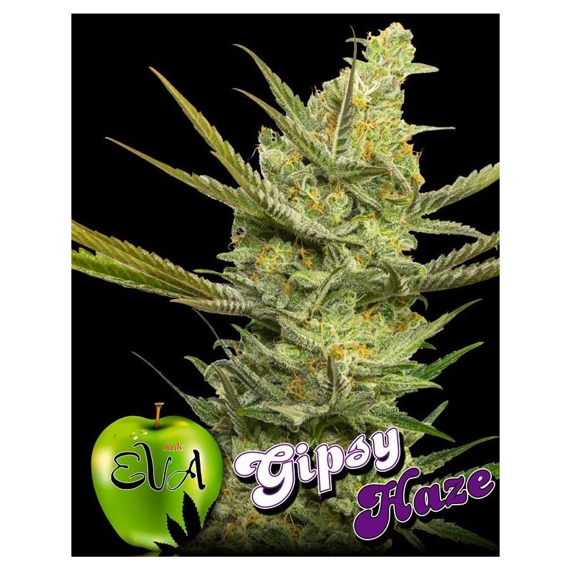 Gipsy Haze de Eva Seeds