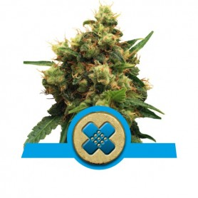 Painkiller XL Medicinal de Royal Queen 3u