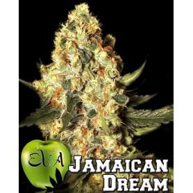 Jamaican Dream Feminizadas de Eva Seeds