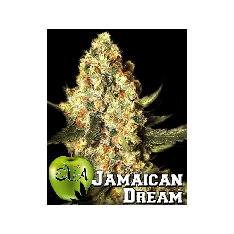 Jamaican Dream Feminizadas de Eva Seeds