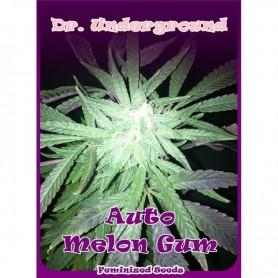 Melon Gum Autofloración de Dr. Underground 4u