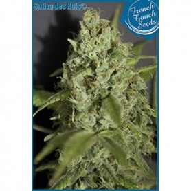 Sativa Des Rois Feminizadas de French Touch Seeds 3u