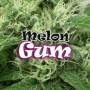 Melon Gum Feminizadas de Dr. Underground 4u