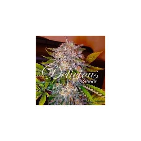 Caramelo Feminizadas (Sativa Line) de Delicious Seeds 3u