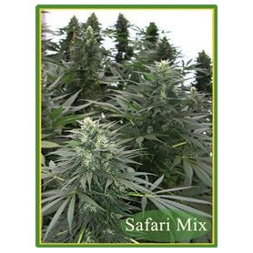 Safari Mix Regulares de Mandala Seeds 10u