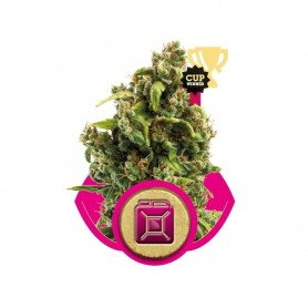 Sour Diesel Feminizadas de Royal Queen 1u