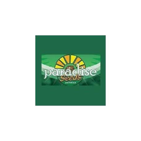 Delahaze Feminizada Paradise Seeds