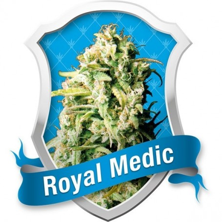 Royal Medic Feminizada de Royal Queen