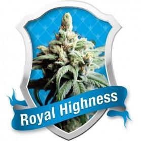 Royal Highness Feminizada de  Royal Queen