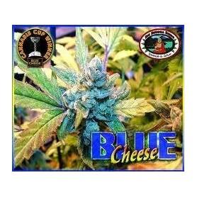 Blue Cheese Feminizada de Big Buddha Seeds
