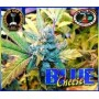 Blue Cheese Feminizada de Big Buddha Seeds