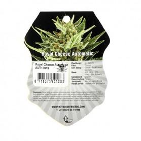 1 Semilla Royal Cheese Autofloración de Royal Queen