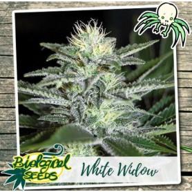 White Widow Feminizadas de Biological Seeds